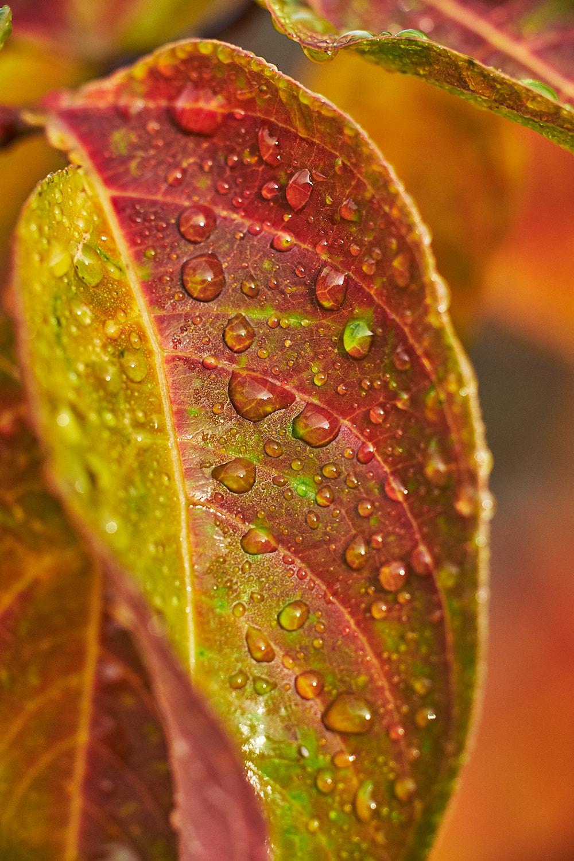 autumn2018 020.jpg