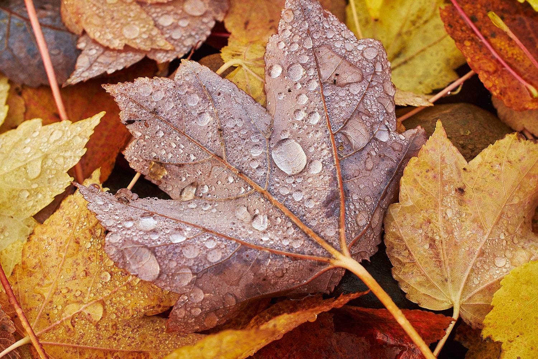 autumn2018 023.jpg