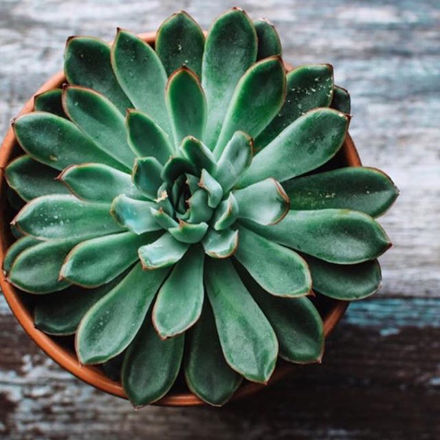 Succulents are such a simple but beautiful touch 🌵 - and they last forever and don't require much care and attention !! We often put them on bedsides to add a pop of greenery 🍃 and plants are proven to be calming and good for mental health ... what more could you want ?! • • • 📷 photo source unknown  #shadesofgreen #greenhues  #interiorstyling #interiorinspo #interiorstyle #homedecor #proprental #furniturerental #sustainableinteriors #ecofriendly #ahappyhome  #stylesnapsell #interiordecor #londonproperty #mentalhealth