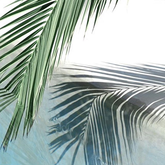 Palm leaves in print 🍃🌵🌴🌿💚 • • • 📷 photo source unknown  #shadesofgreen #greenhues  #interiorstyling #interiorinspo #interiorstyle #homedecor #proprental #furniturerental #sustainableinteriors #ecofriendly #ahappyhome  #stylesnapsell #interiordecor #londonproperty