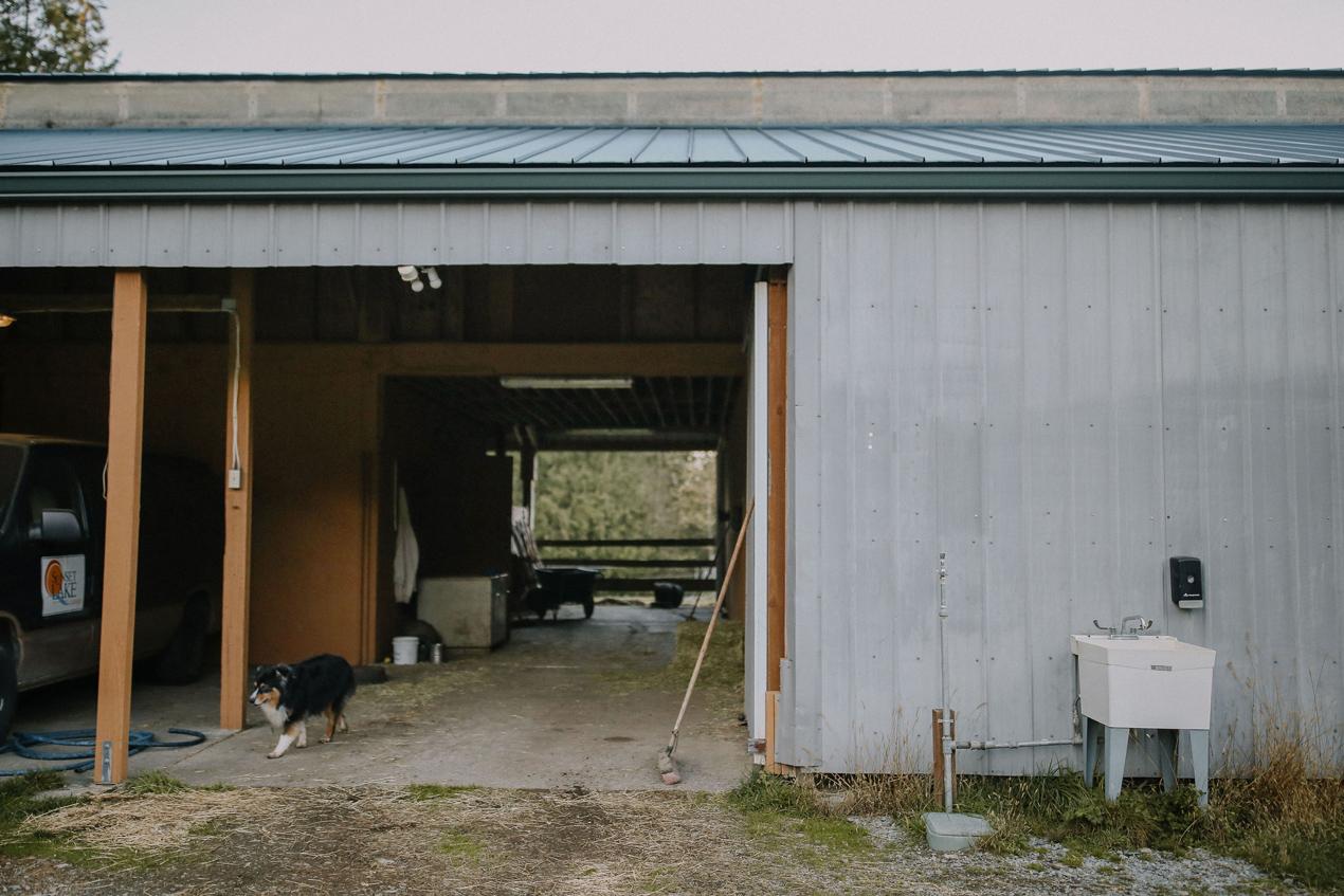 Sunset Lake Horse Barn 1