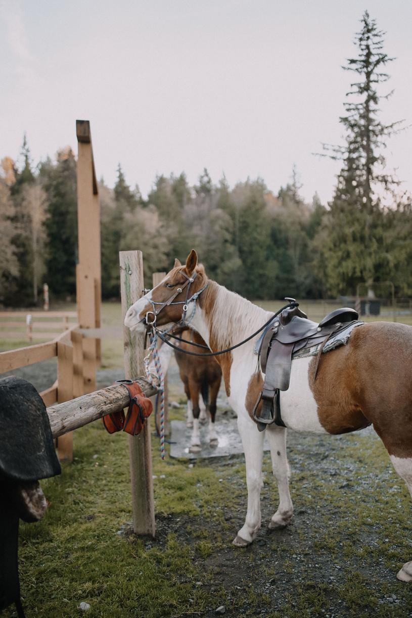 Sunset Lake Horse Barn 2