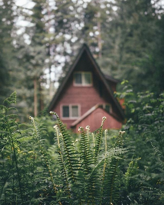 A Frame beyond the pines🌲🌿 . . . . 📷: An entry from For Emma, Forever Ago #aframe #aframecabin #cabins #cabinlove #soaplove #designinspiration #cabinlife #coldprocesssoap #woodlandssoapco #woodlands #pnw #handmadesoap #cabin #houseofsoap #aframedaily #woods #backwoods #pnwonderland #themountainsarecalling #explore #outdoors #woods #exploregon #pine