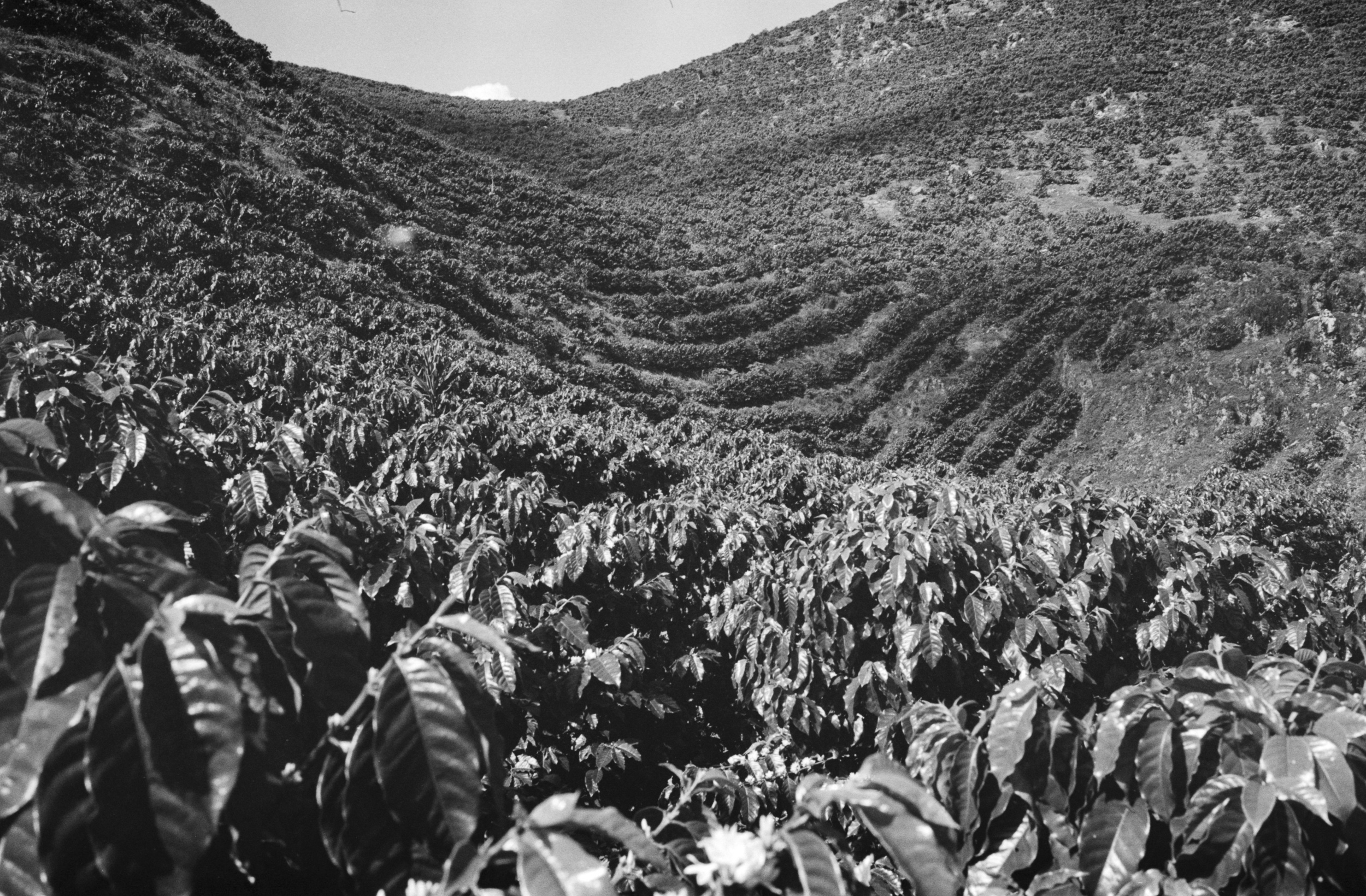 websized Analog Photographer living in Playa del Carmen Tulum Traveling the World014.jpg