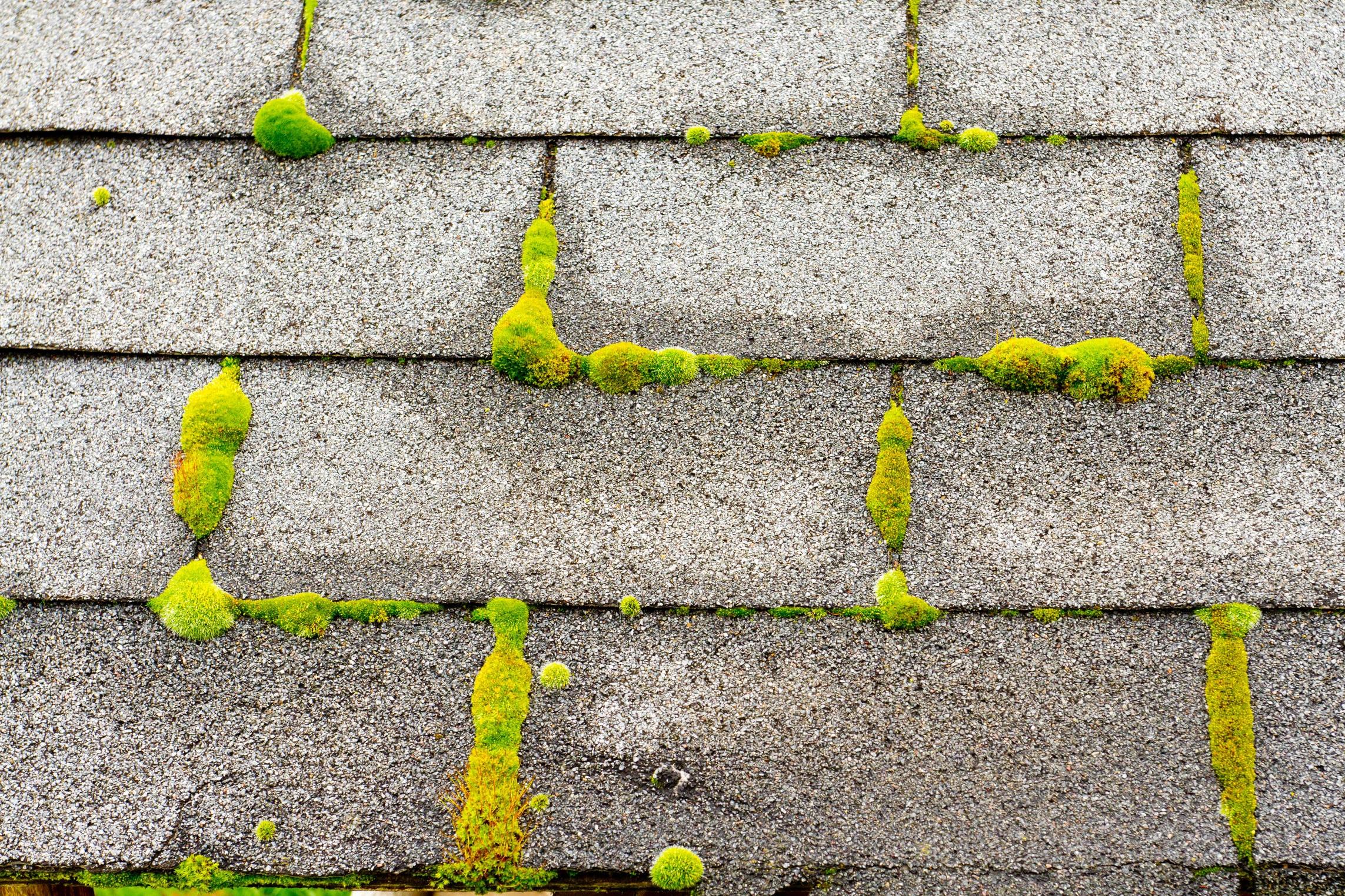 Roof+moss.jpg