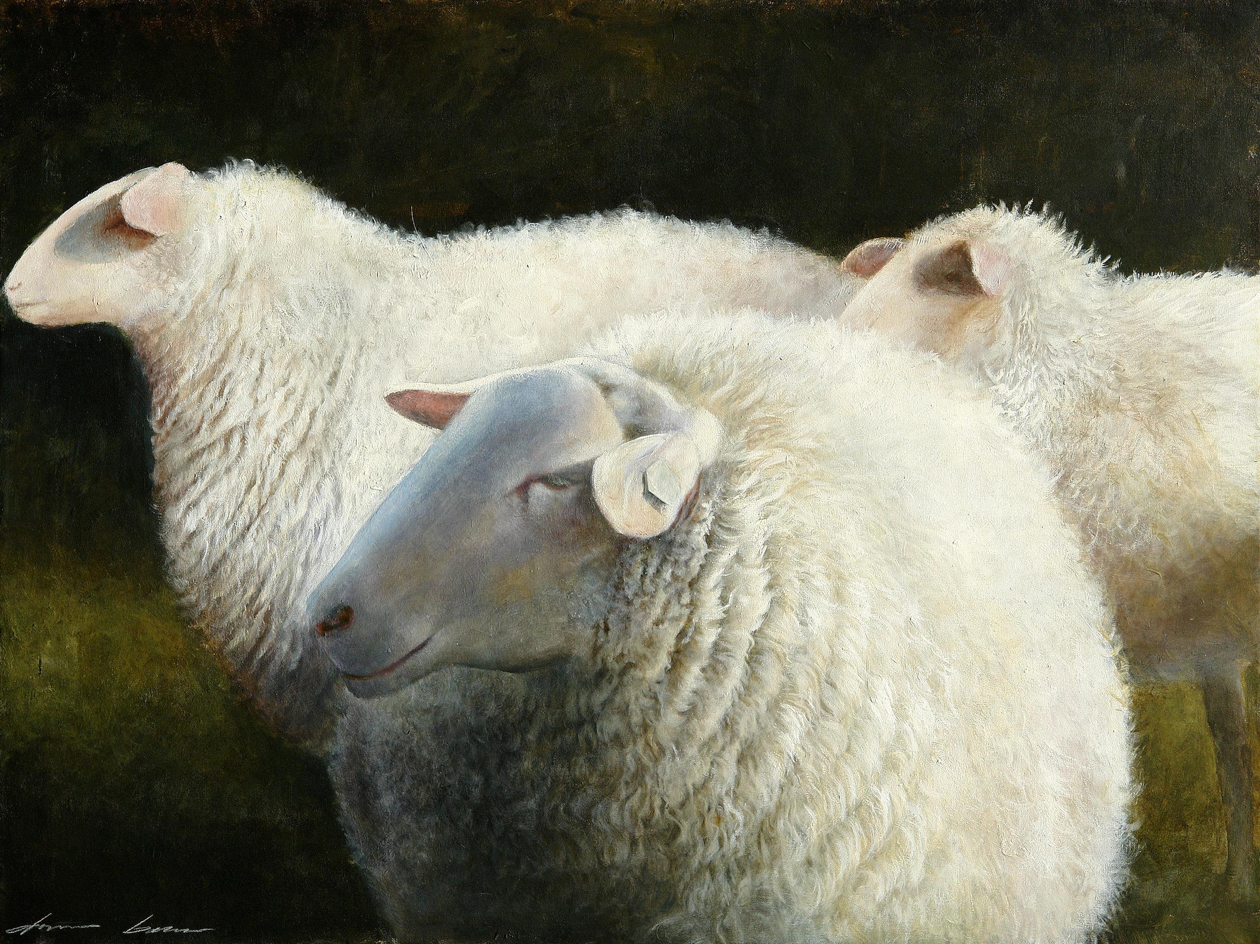 Sheepongreen.jpg