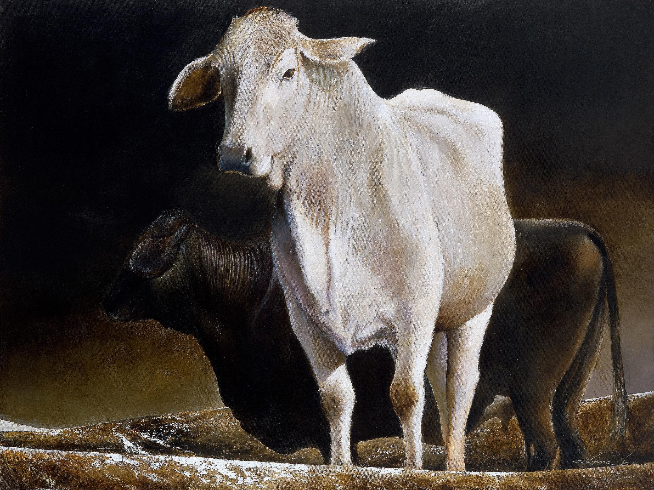 livestock Brahmas 9x.jpg