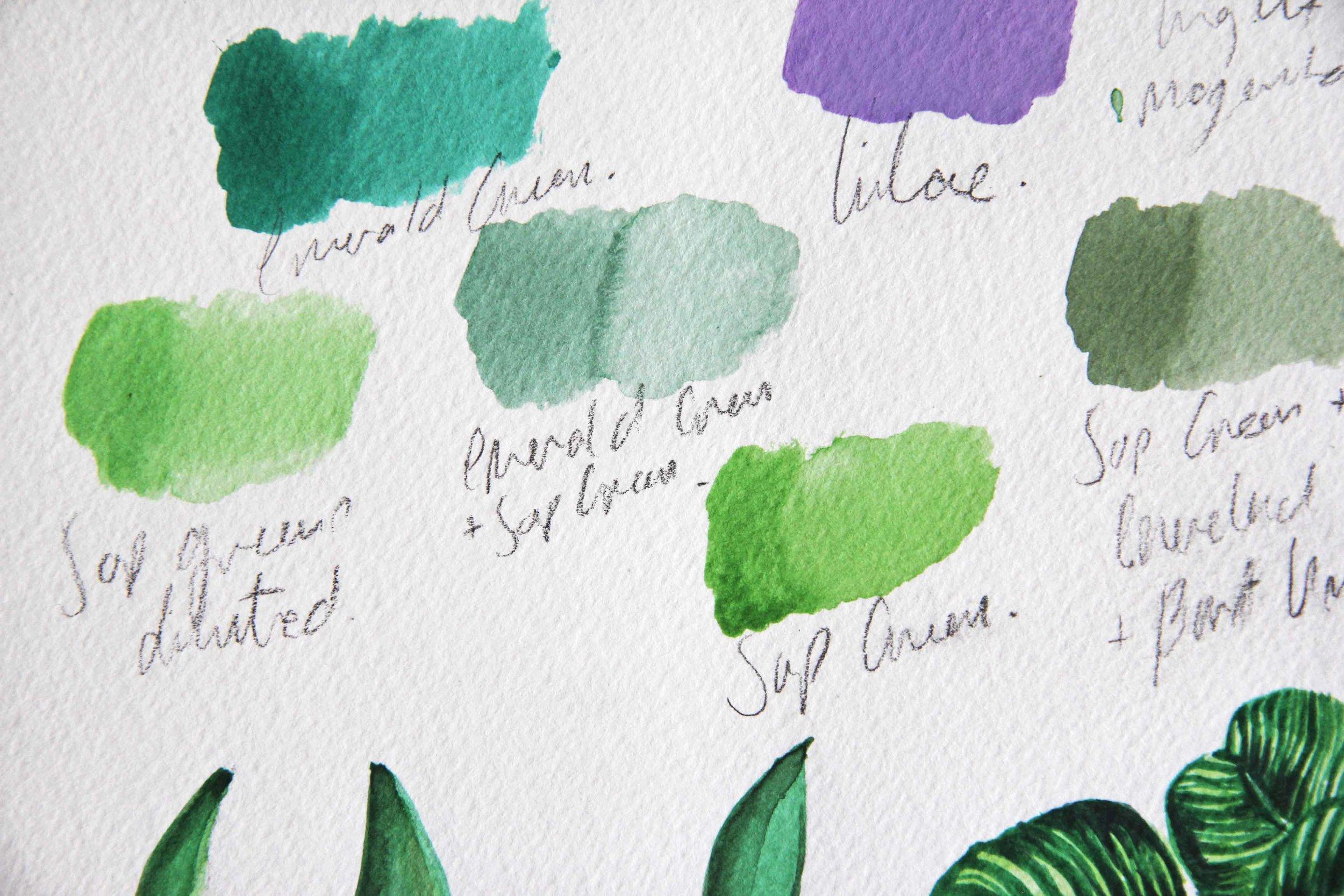 Plants Artwork-9.jpg