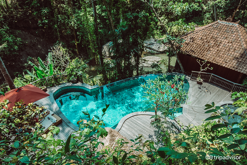 pool--v10189575.jpg