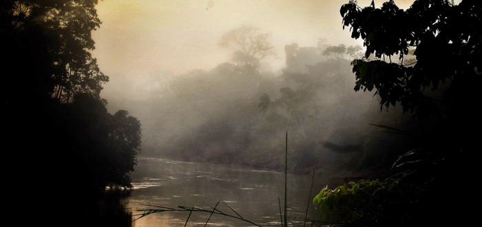 A misty morning in the Amazon, image by Scott Haber