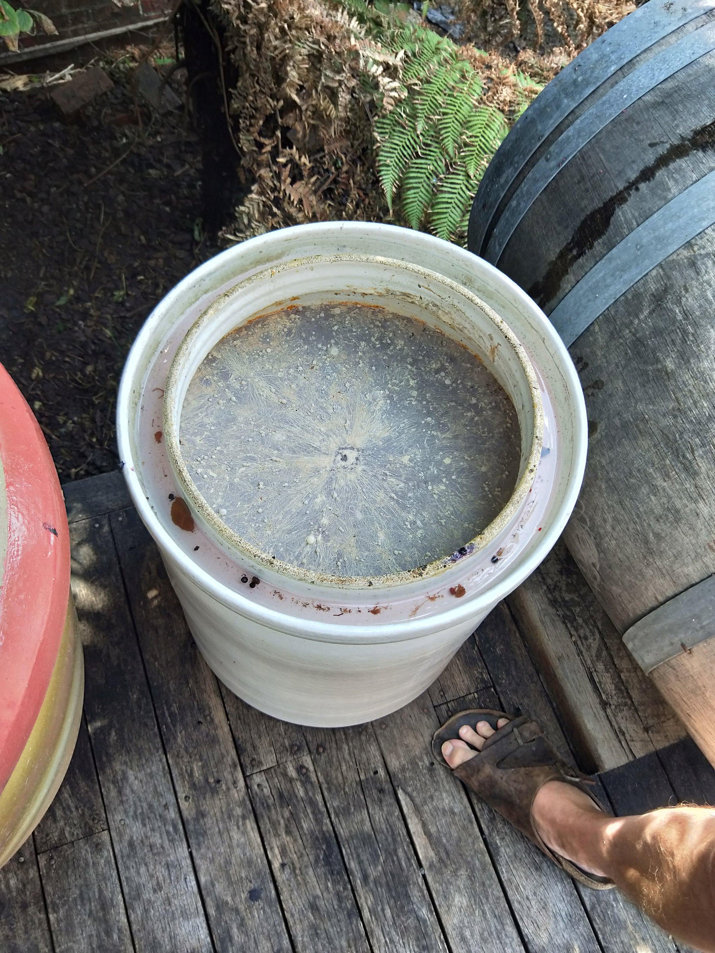 Red Lentil... Vinegar