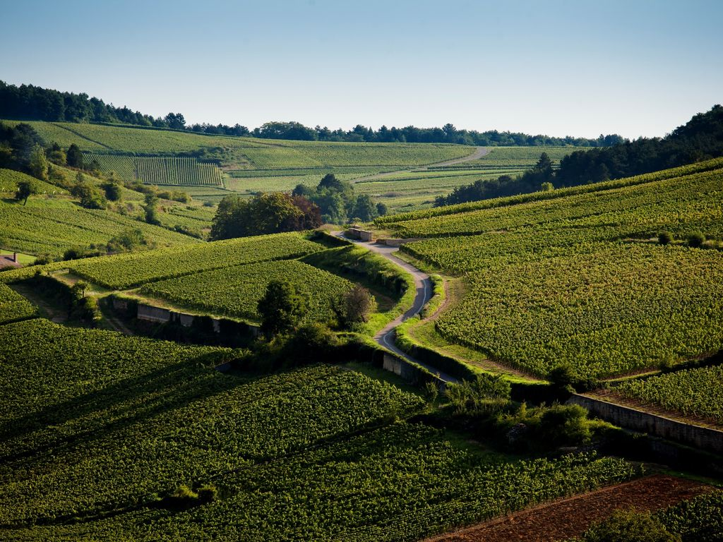 a Wine Lover's Paradise, a great cuisine, and beautiful landscapes -