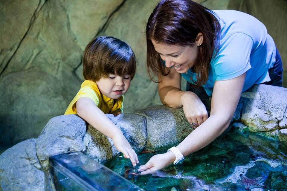 Quiet at the Aquarium Sea Life.jpg