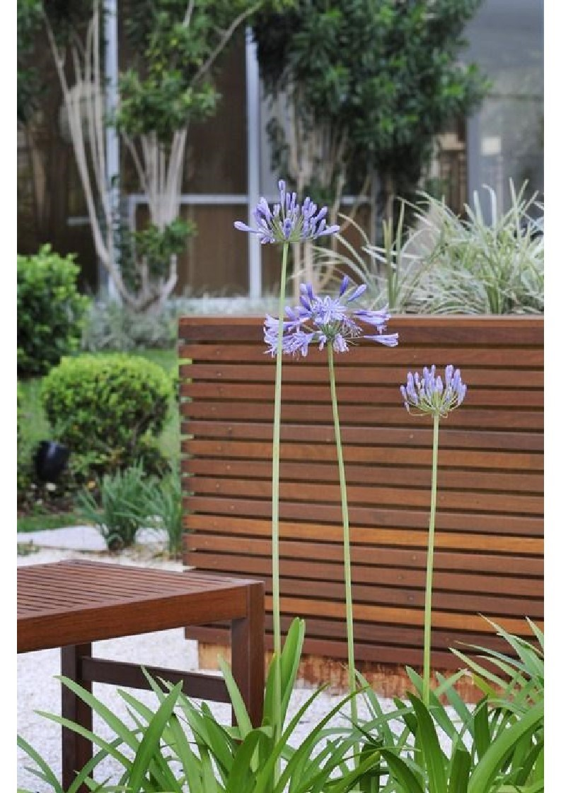 4 Soleil Jardim 3.jpg