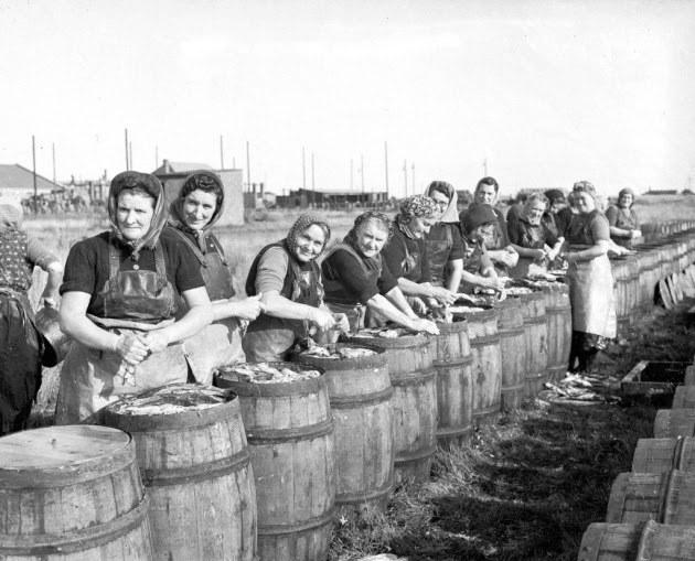 Fisherwomen packing herring into caskets during herring season in Great Yarmouth, 1953. Photo: Archant Library