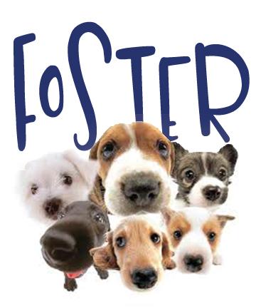 foster.jpg