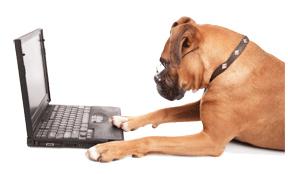 dog-email.jpg