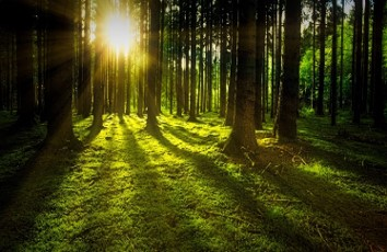 Green forest.jpg