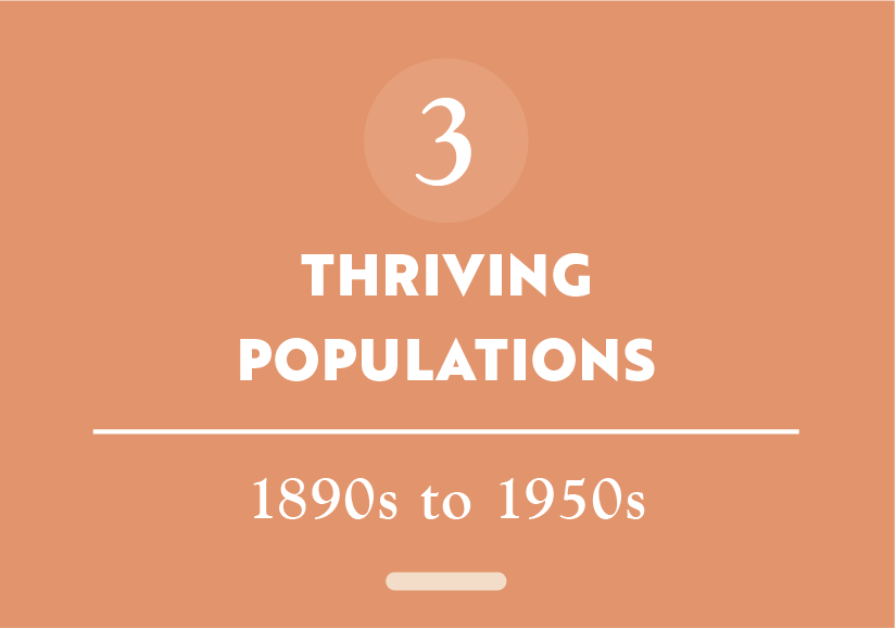 Button_Story 3_Thriving Populations.png