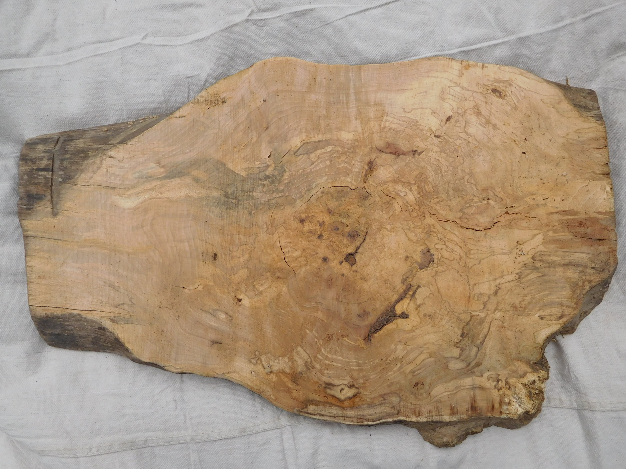 "Maple Burl 4 side B - 25"" x 17"""