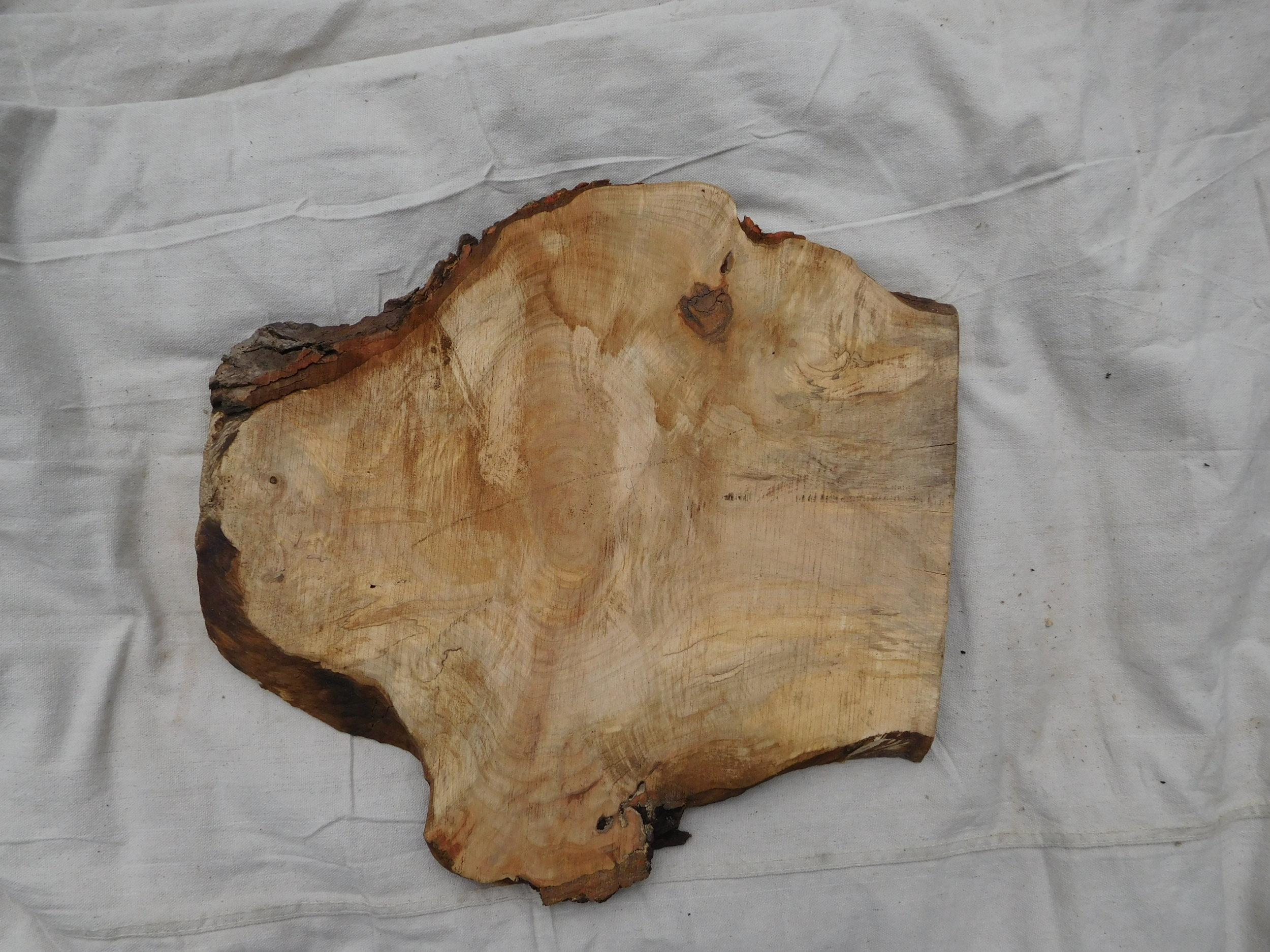 "Maple Burl 3 side A - 19"" x 18"""