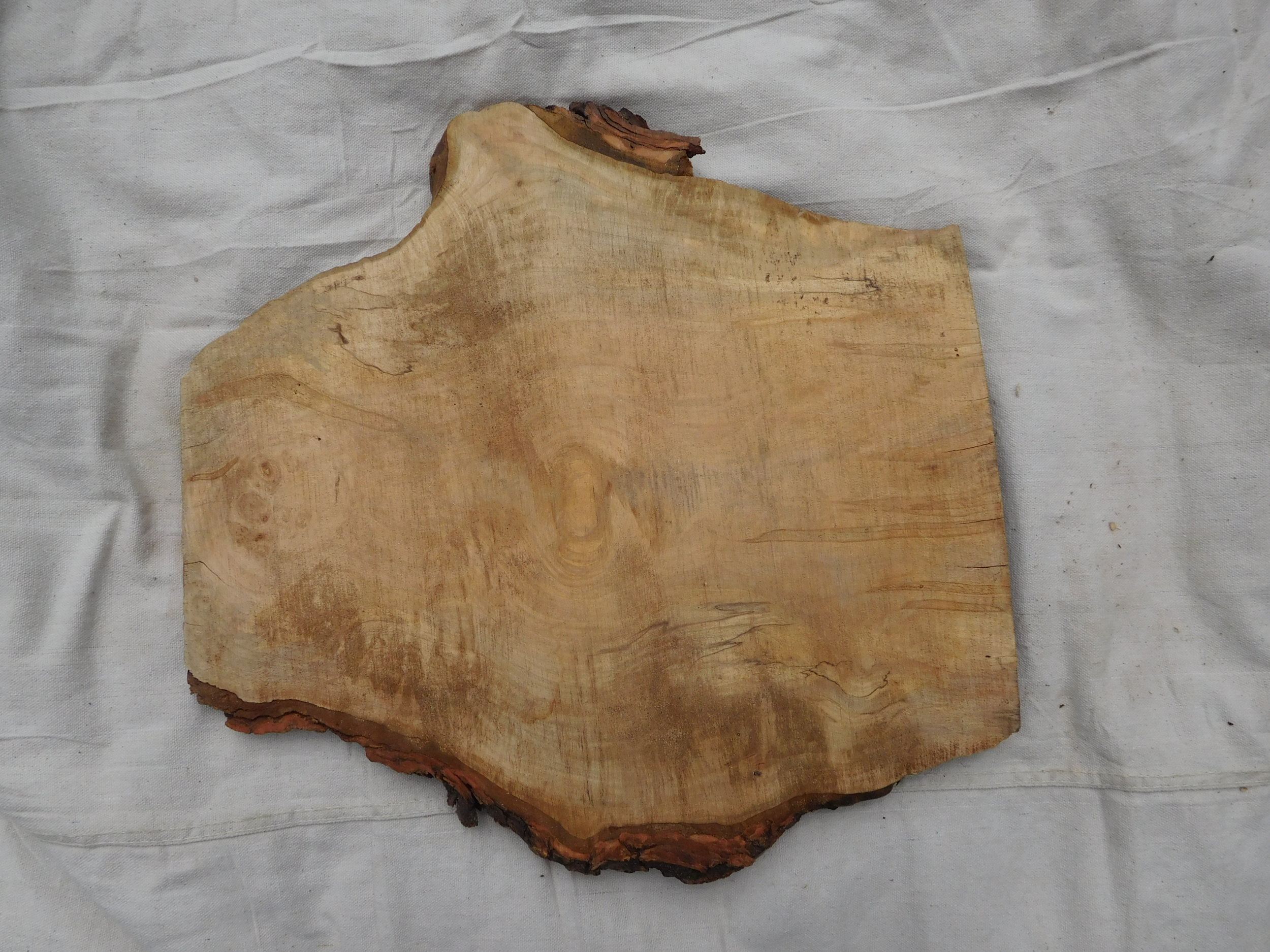 "Maple Burl 3 side B - 19"" x 18"""