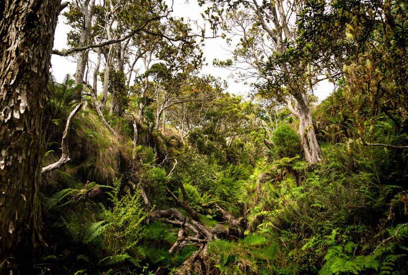 Nakula-Forest.jpg