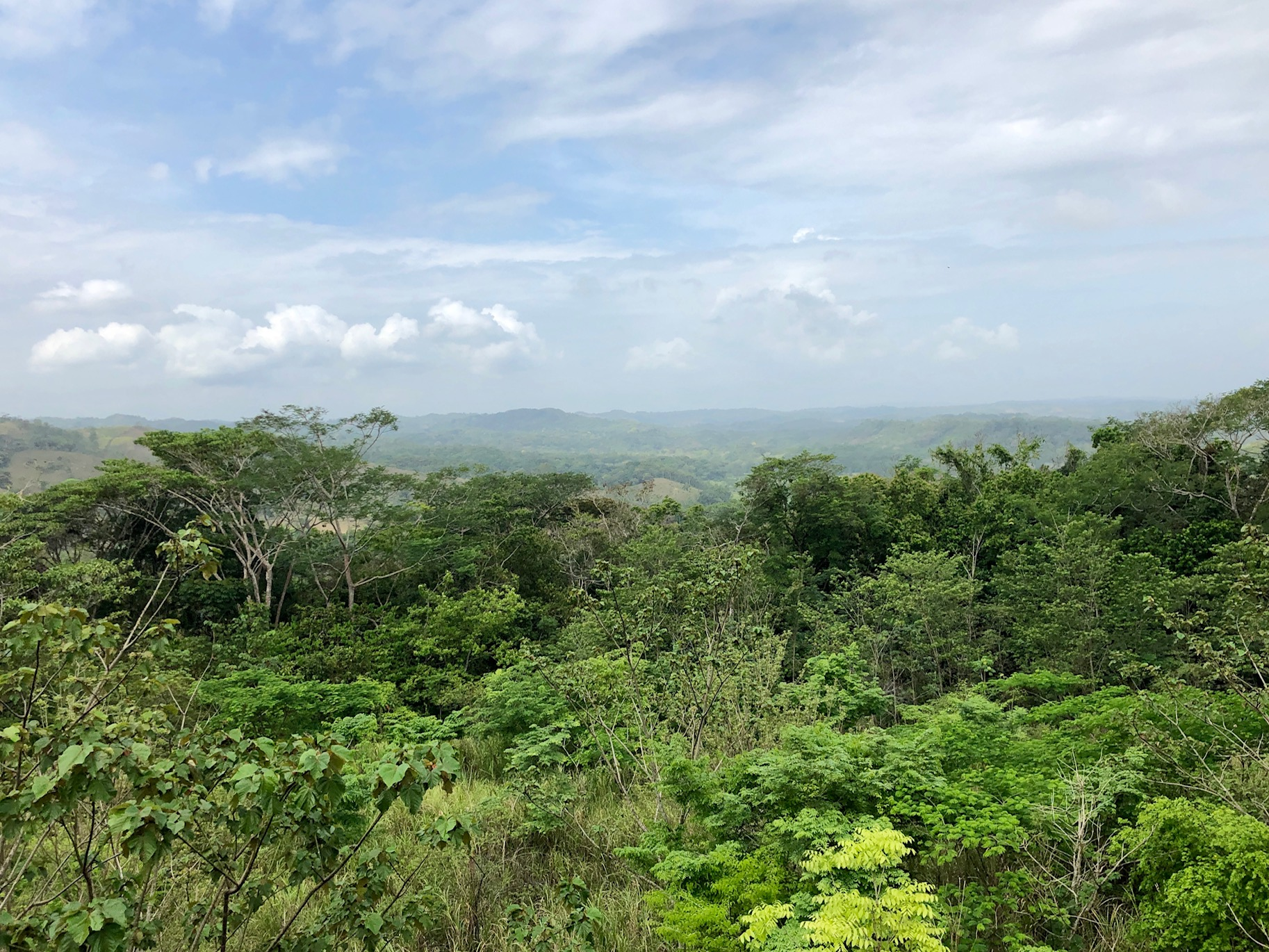 Panama Jungle.jpeg