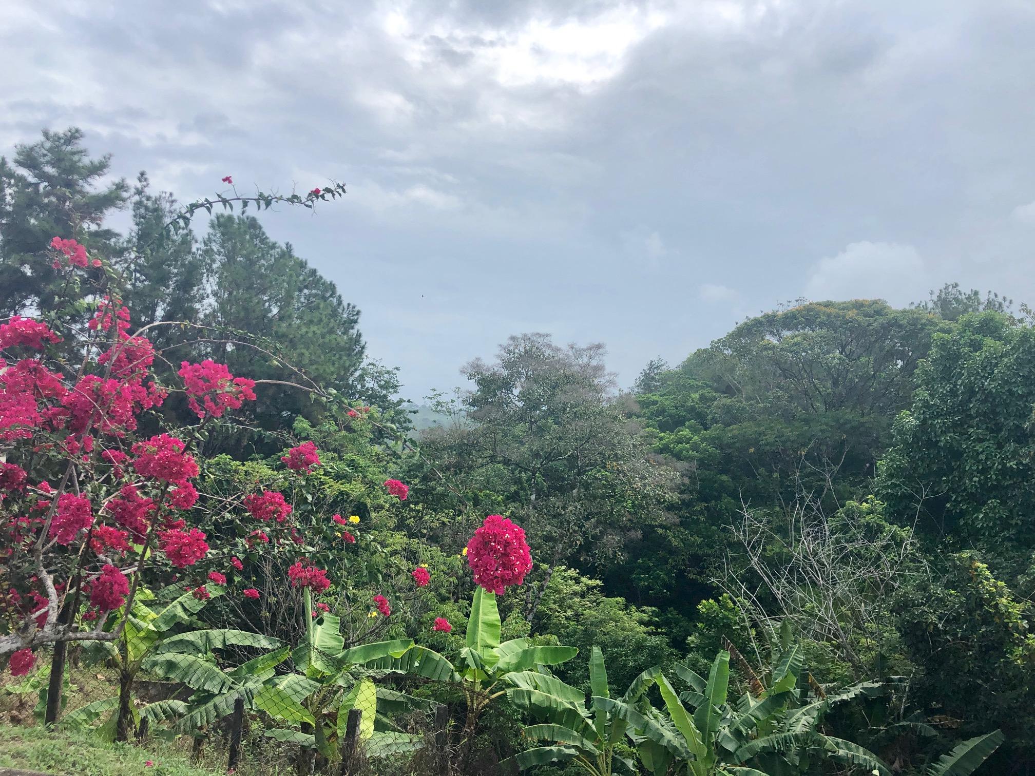 Panama jungle flower.jpeg