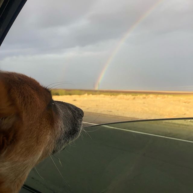 Thankful for buckwheat's first rainbow. 🌈🐶