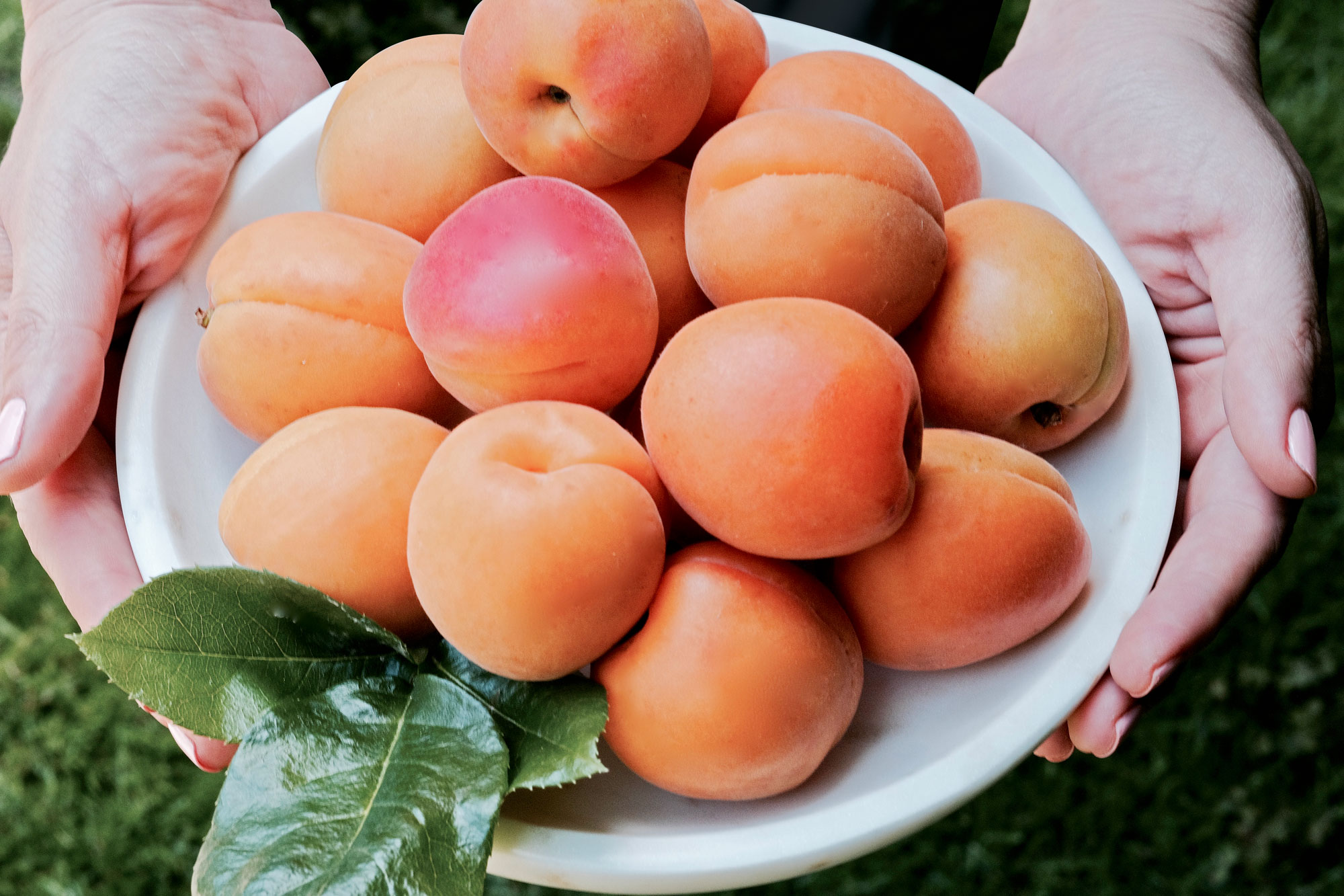 home-peaches.jpg