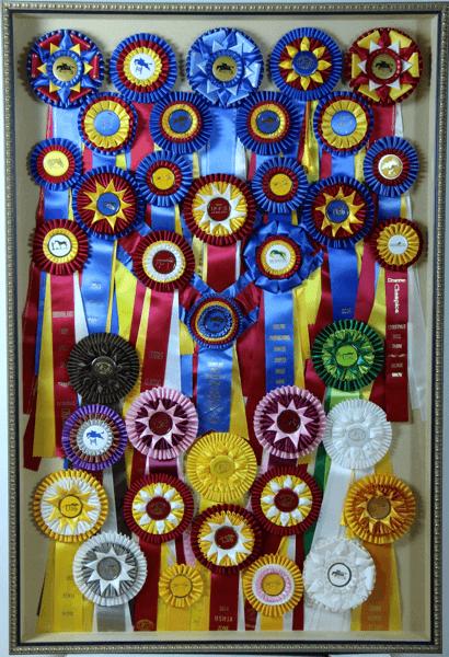 horse-ribbons.png