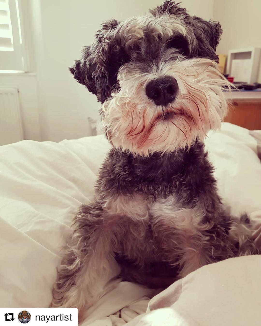 Laurel, now called Bessie, living happily in Devon, pictured 2018