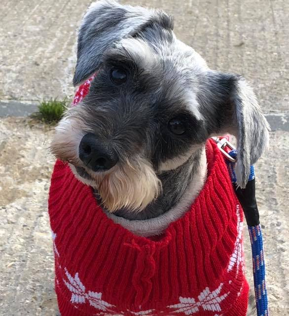 Nell in her Christmas jumper, she might not have good eyesight but it hasn't stopped her perfecting the head tilt (Thanks to Julia Loftus for the photo)