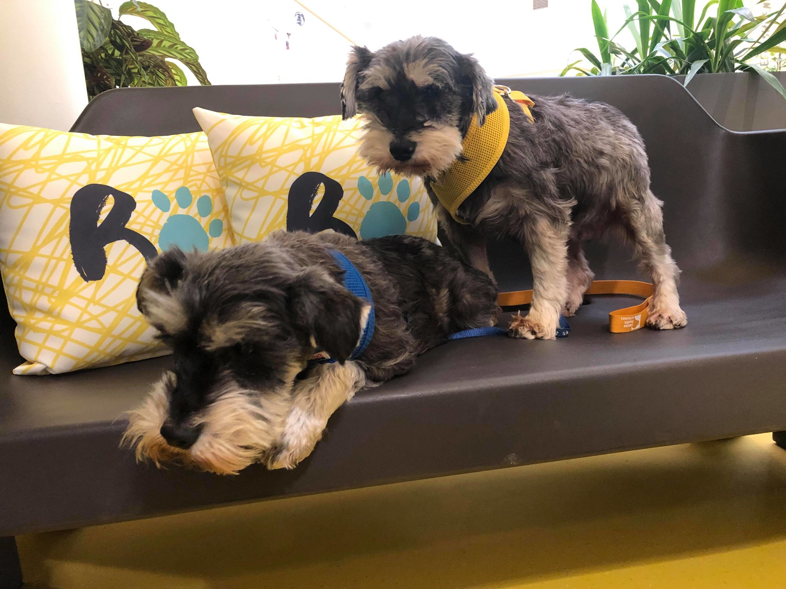 Dennis and Pansy at the Ralph Veterinary Referral Centre
