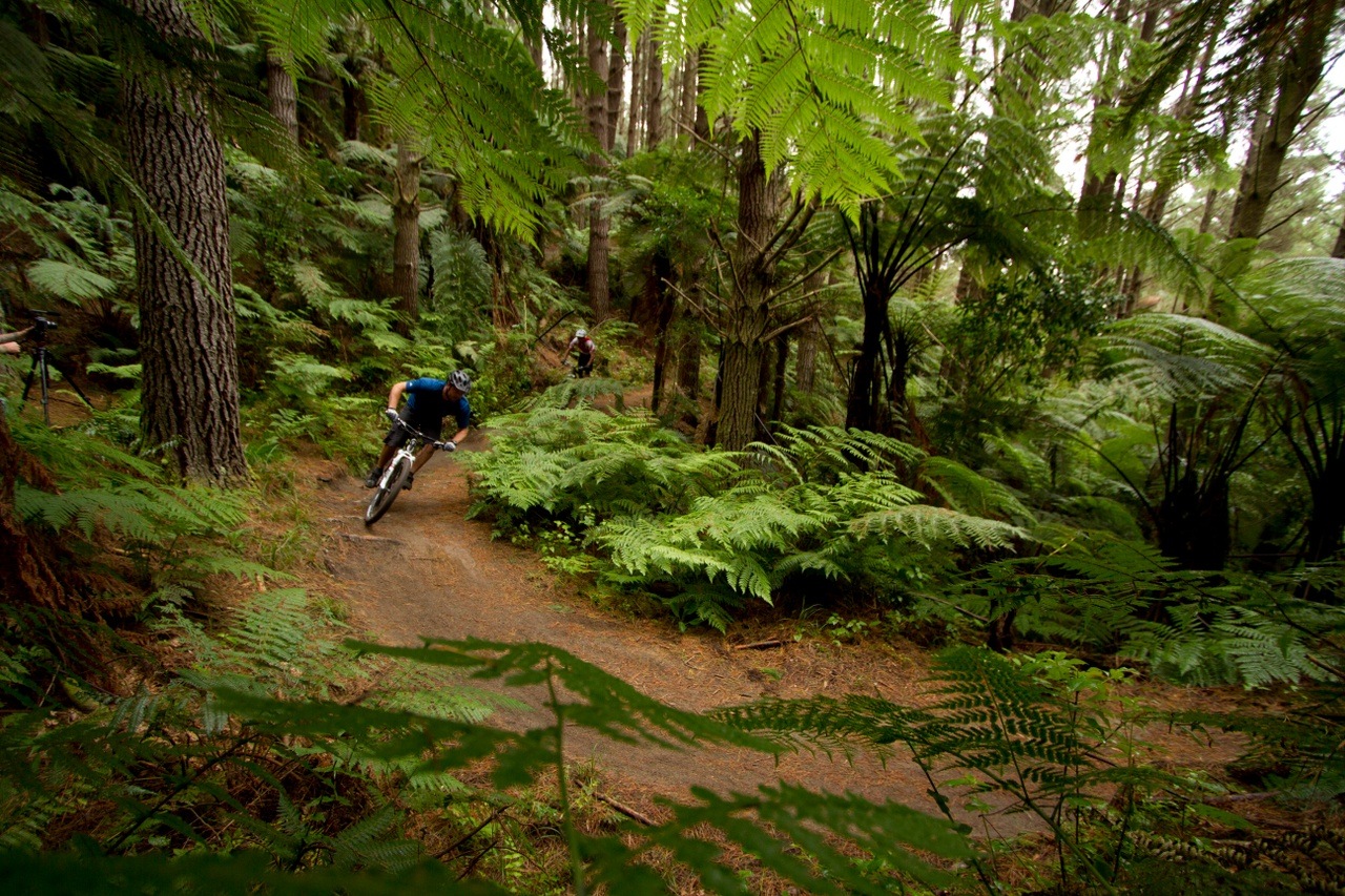 Mountain biking at  Red Woods