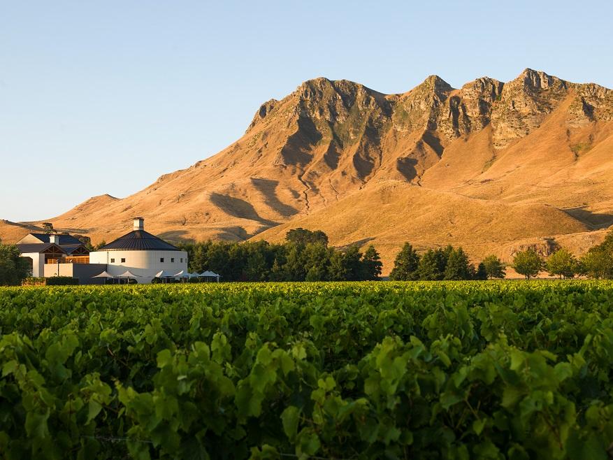 View of winery peak from vines 002.jpg