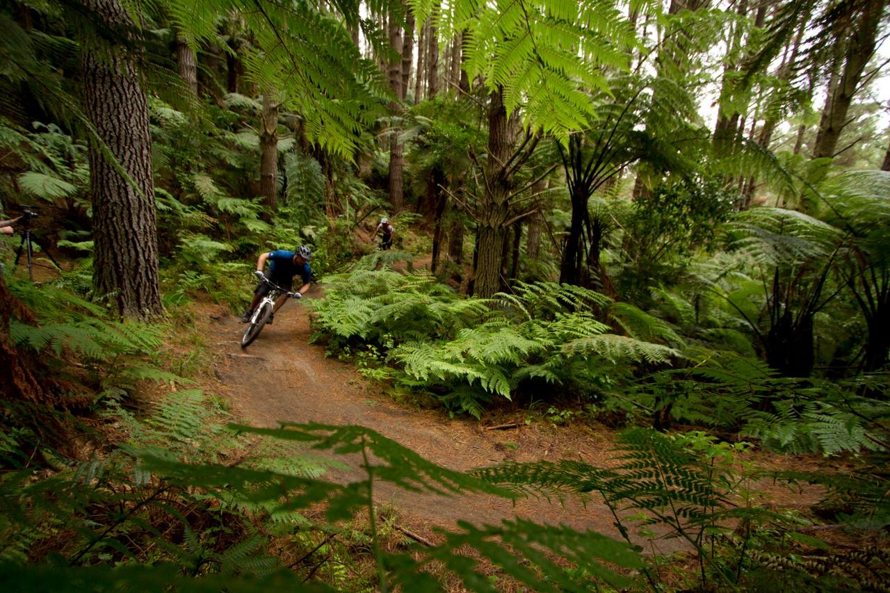 Mountain Biking Forest.jpg