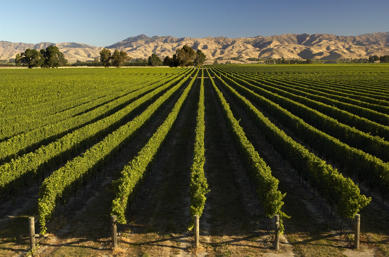Marlborough Vineyard 2.jpg