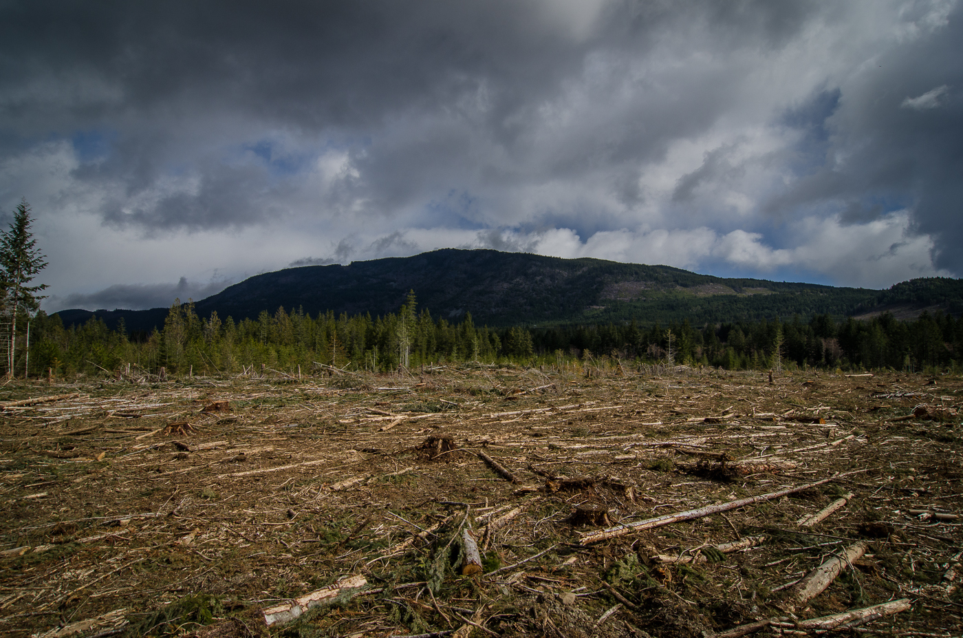 Cutblock near Nanaimo.  While it looks sad, this is a 2nd or 3rd growth cutblock, the future of sustainable logging.
