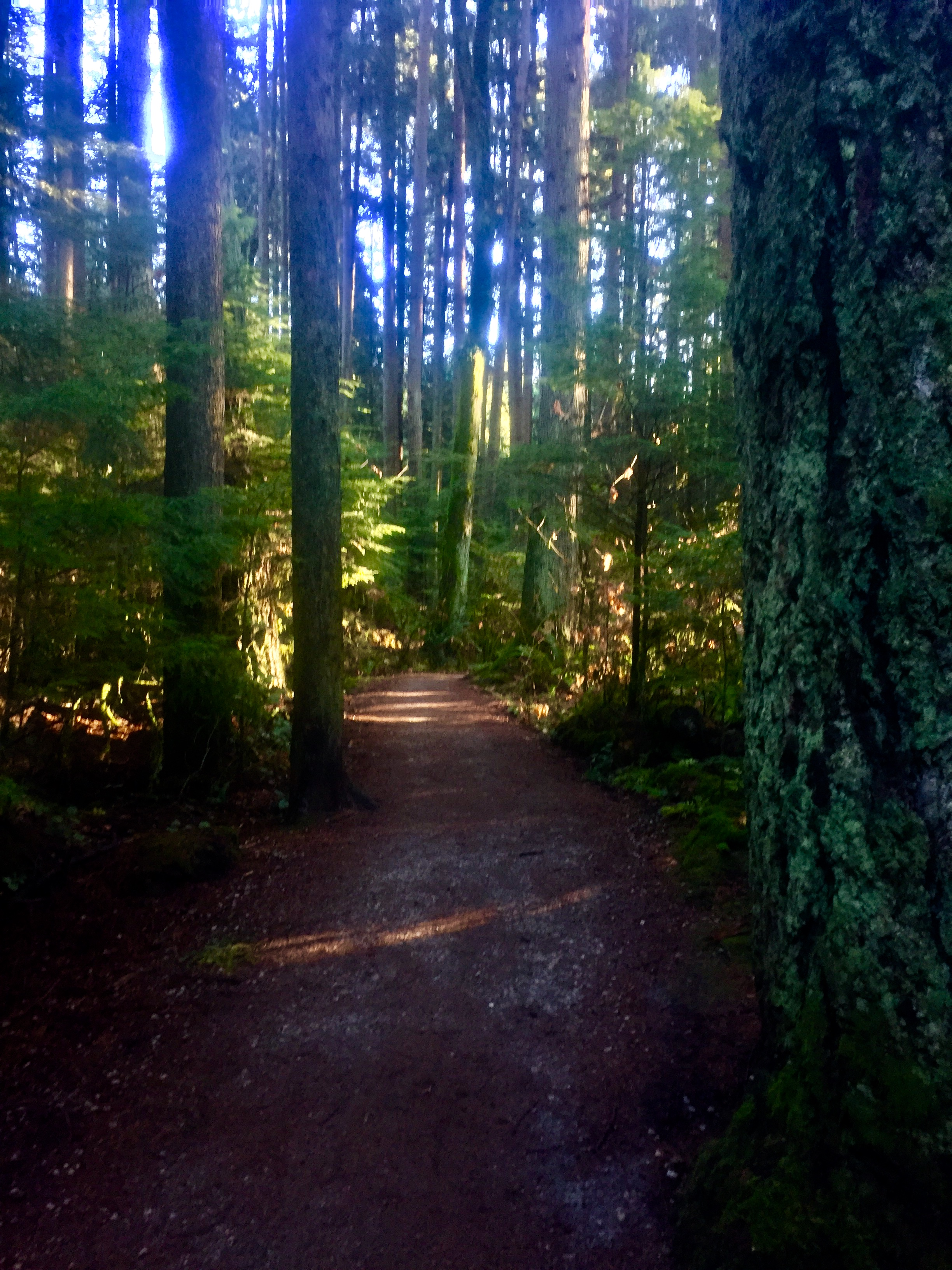 Disappear into the tranquility of Pacific Spirit Regional Park