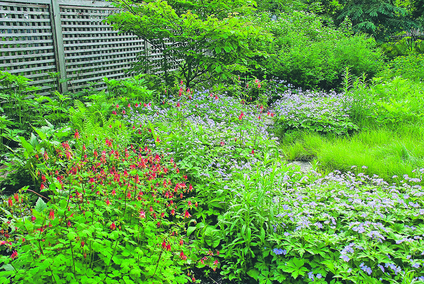 Vild trädgård.jpg