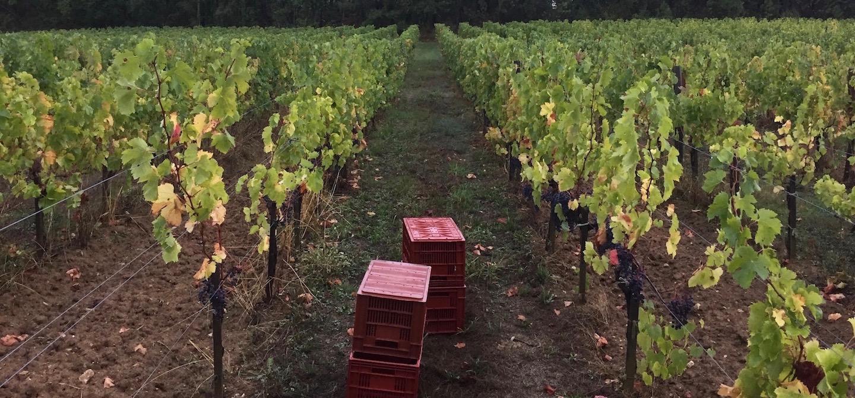 Ormiale - Mérignas – Bordeaux