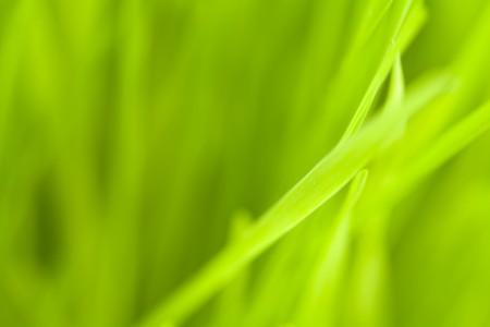 Green-Design-450x300.jpg