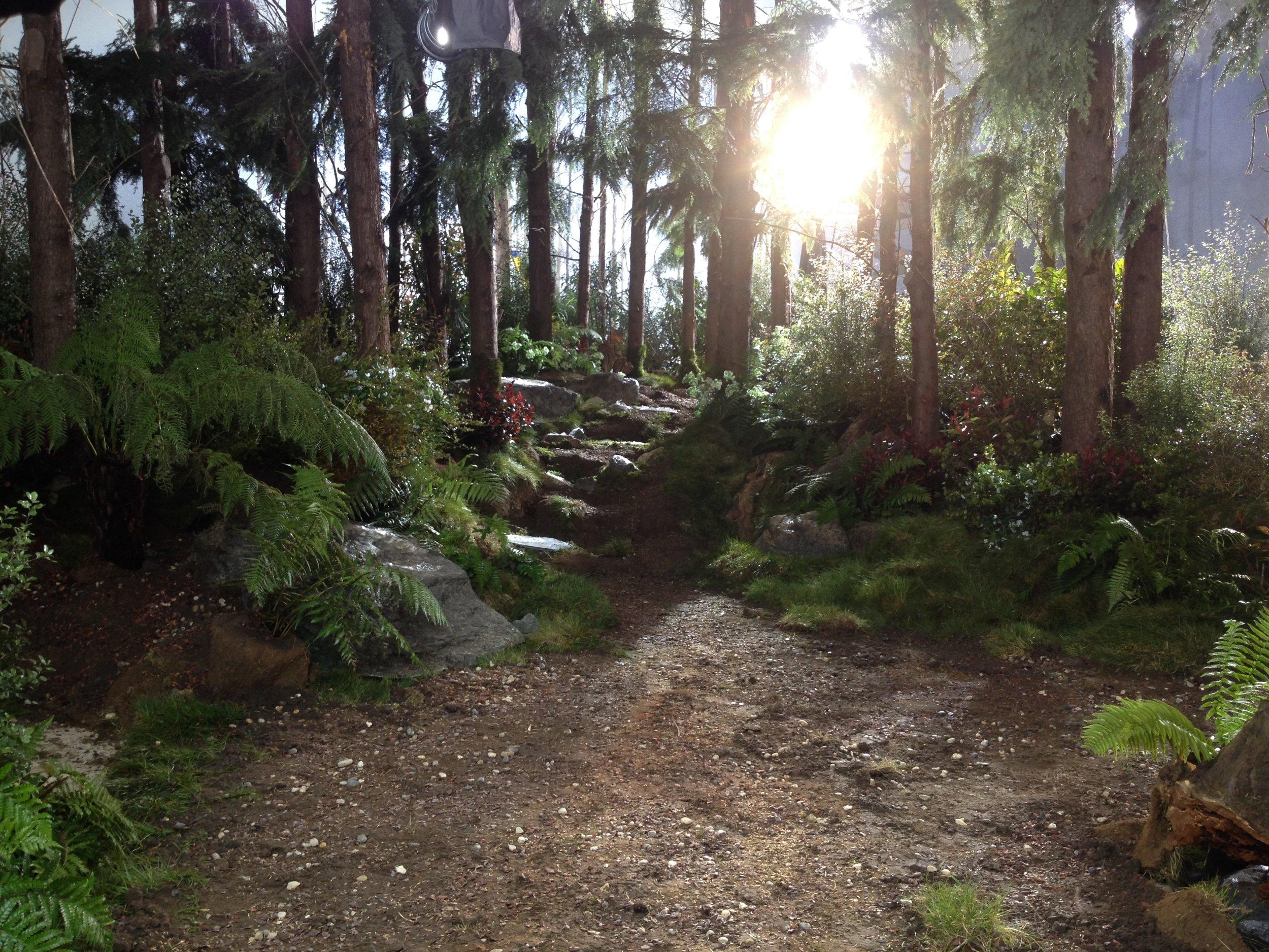 11.bTimotei forest.JPG