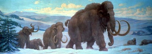 Mammoths in the Tundra ( Charles R. Knight )