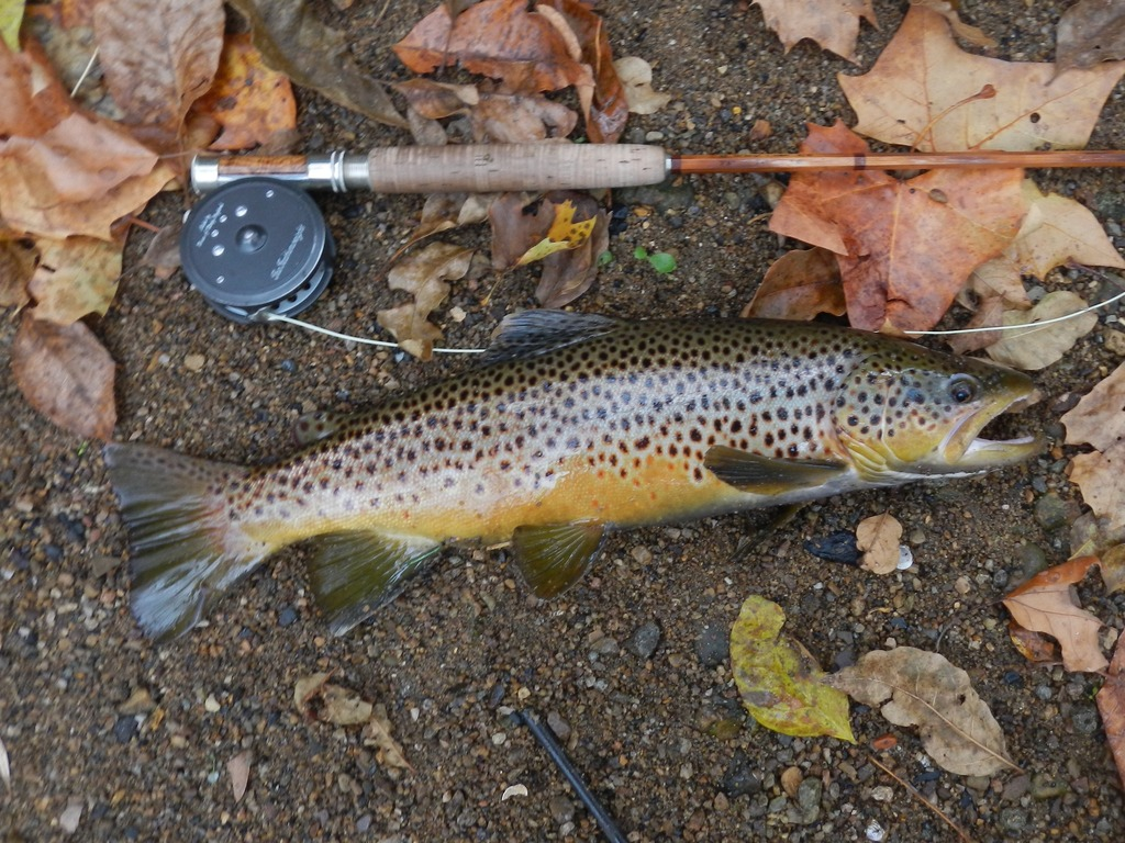 Fly FishingGallery -