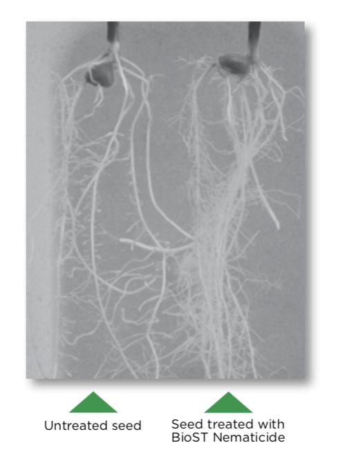 BioST Nematicide Comparison Pic.png