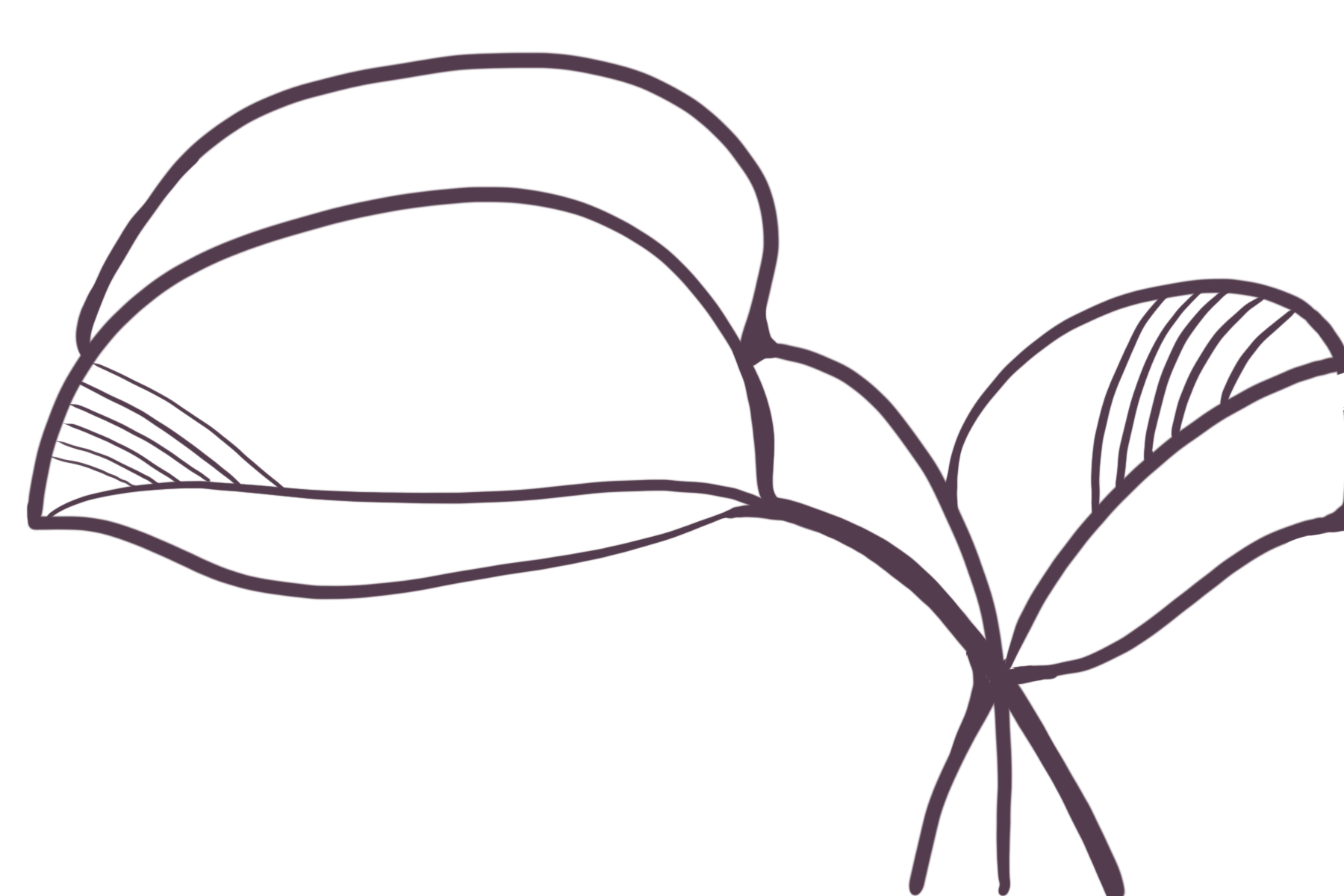 Line_Leaves_03-17.png