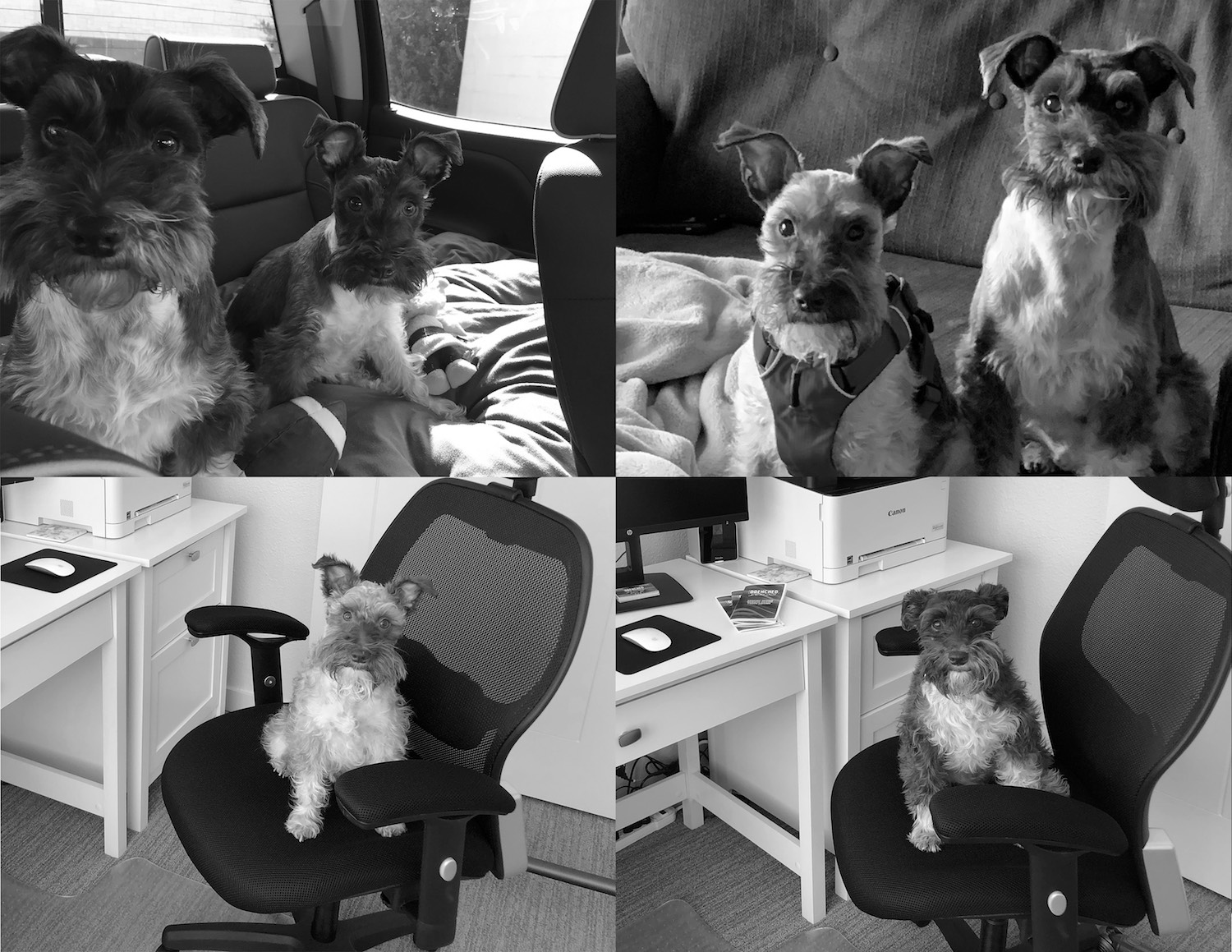 Design assistants and travel partners - Franklin and Otis